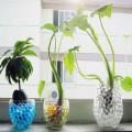 Aarde vervanger, water balletjes voor bloemen en planten.